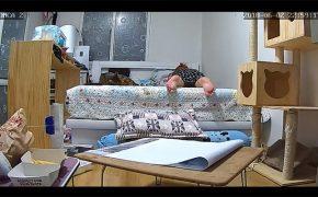 【民家盗撮動画】ネコと暮らす一人暮らしの女性の様子