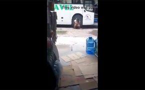 【野ション盗撮動画】バスの目の前でションベンしてる女性