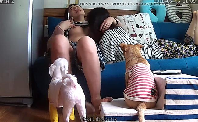 【民家盗撮動画】ワンコ2匹が見つめる前でレズるマンコ2人